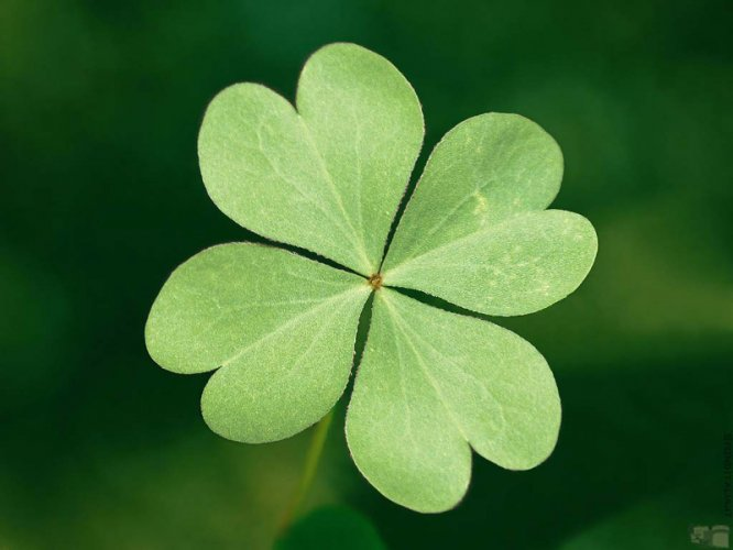 4_leaf clover