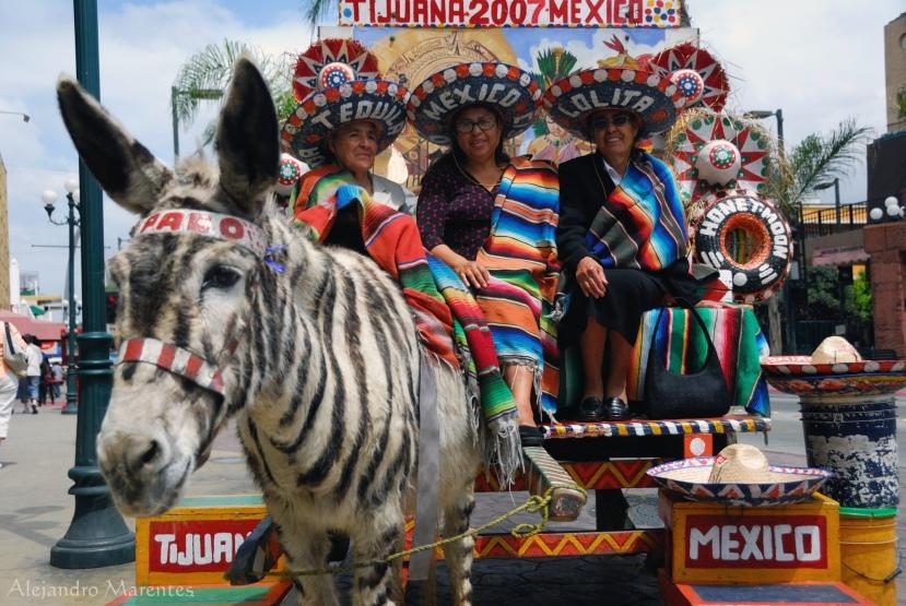 Zebra donk