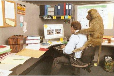 monkey backl