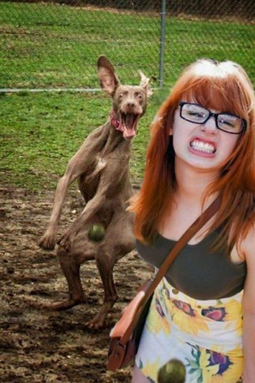 Funny-Pictures-Dog-Photobomb